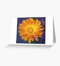 Bicolor Calendula Flower Greeting Card