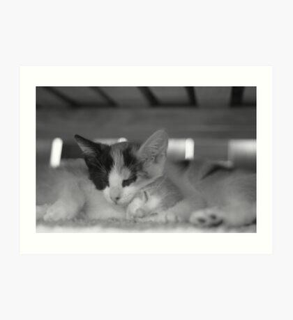 Special Kitties Art Print