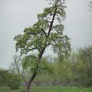 Tree 1 by WhiteDiamond