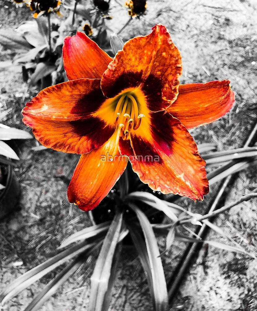 Orange Flower by abrmomma