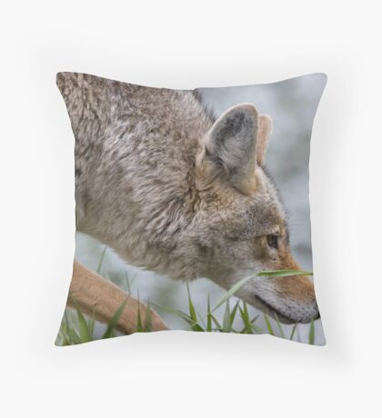Hot On The Trail... Throw Pillow
