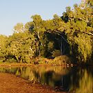 Leichhardt River at Kajabbi Qld.  by Liz Worth