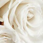 DESERT BLOOM  by WhiteDove Studio kj gordon