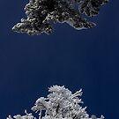 Polar Opposites by DenverCool