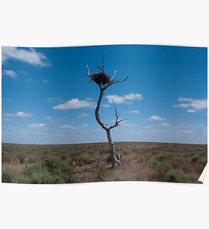 Lone tree, very lonely nest Poster