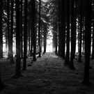An Avenue of Pines by Look-Its-Darren