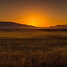 Country Gold by georgiegirl55
