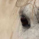 Horse Eye by Deanna Roberts Think in Pictures