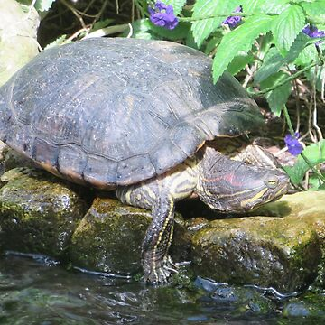 Turtle, sunbathing. by Margarite75