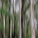 Tall Trees by Kitsmumma