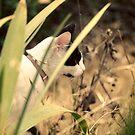 Backyard Jungle by Hollie Cook