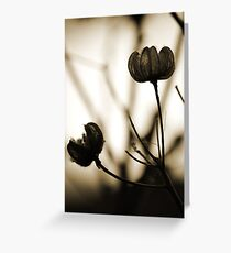 Seed Pods 1 Greeting Card