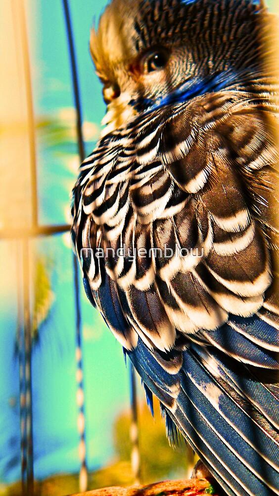 jubba the hut -my budgie - Shadow-Sun-Sleepy  by mandyemblow