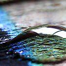 Clarity by Tara Lemana