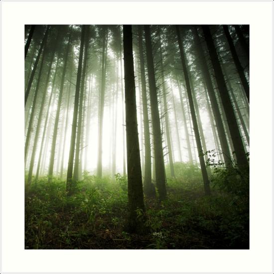 « Green Forest » par Patrice Mestari