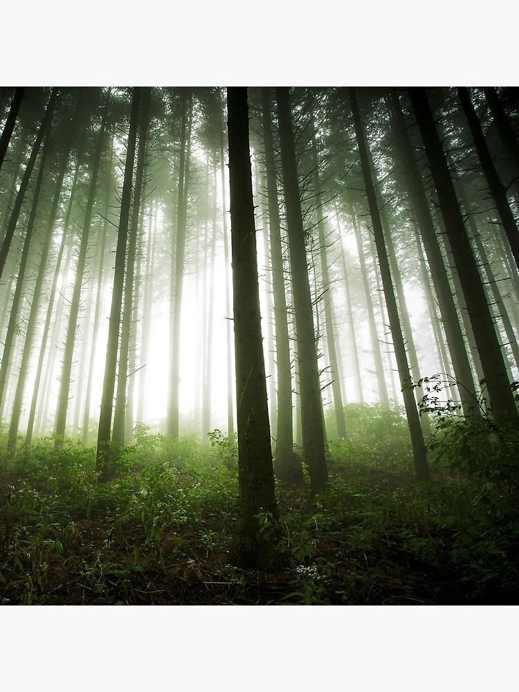 «Green Forest» par patricemestari