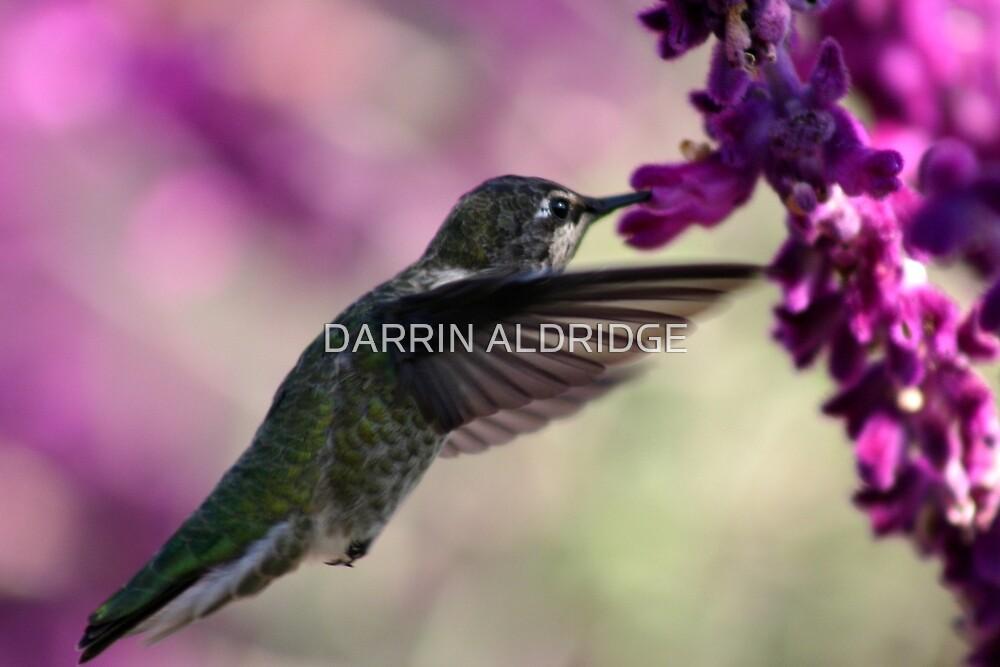 Wings in Motion by DARRIN ALDRIDGE