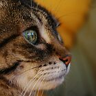 Zoe The Wondercat by warriorprincess