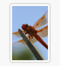 Smiling Dragonfly Iphone Case Sticker