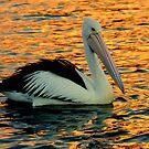 """"""" On Golden Pond """" by helmutk"""