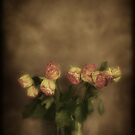 Old Roses by tonilouise