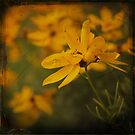 Sea of Yellow pt.][ by Aaron Campbell