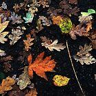 Random Colours of Autumn  by KesiaHosking
