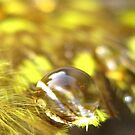 Fields of Gold by Tara Lemana