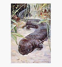 Giant Salamander Art Photographic Print