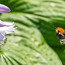 Bumblebee and a Flower by Jon Shore