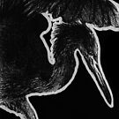 Leucism: Reddish Egret by NoelleMBrooks