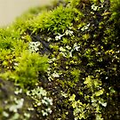 Micro World by KitPhoto