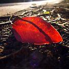 Leaf Litter by Digby
