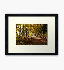 Path through autumn forest Framed Print