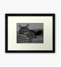 Miss Gracie Framed Print