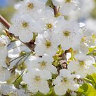 Tiny White Flowers by Dave Hare