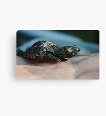 Baby Snapping Turtle #2 Canvas Print