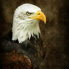 Bald Eagle  by Bine