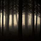 Dark Forest by Patrice Mestari