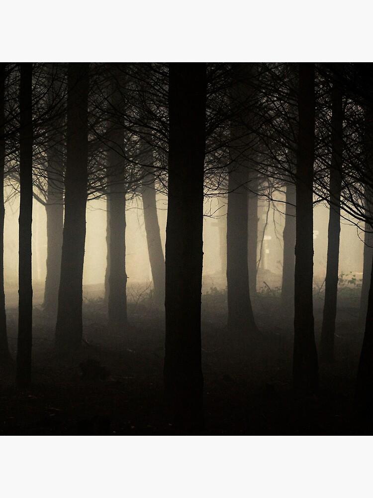 «Dark Forest» par patricemestari