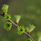 Tufts by KitPhoto