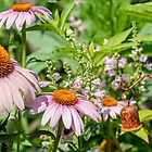 Dance of the Cone Flowers by Cathy Donohoue