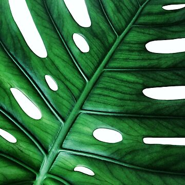 Monstera Exotic Green Leaf by BluePlanet