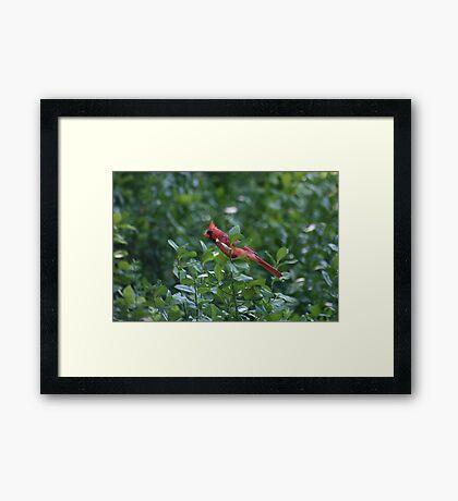 Cardinal Green Framed Print