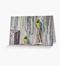 2 Parrots Drawing Greeting Card