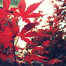 Rouge|Un by MRPhotography