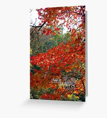 the flamin' maple ll Greeting Card