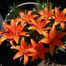 Nine Is Nice - Sunkissed Orange Lilies by Kathryn Jones