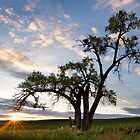 Sunset Tree by SearchingLens