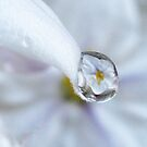 Drops of Magic - Macro Water Photography by Tara Lemana